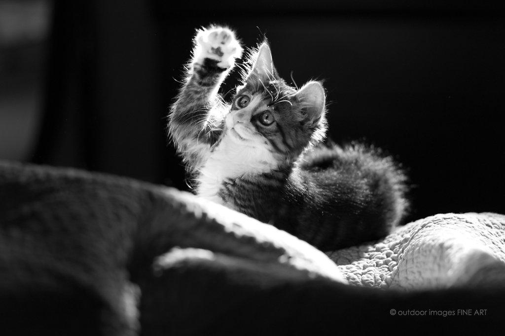 Leica Mastershots